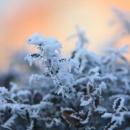 Winter Schauspiel